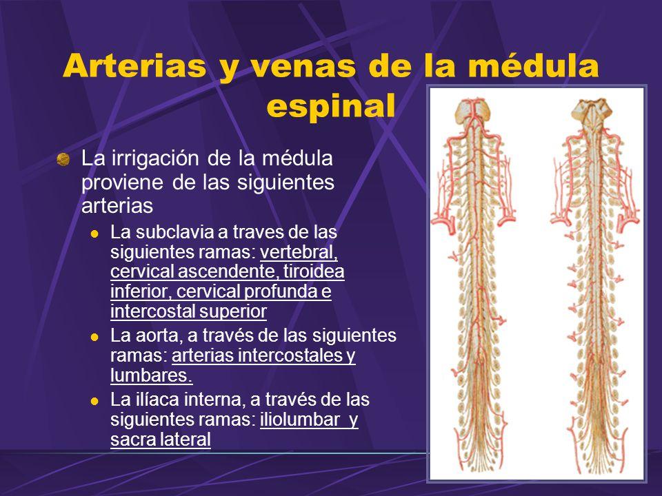 Arterias y venas de la médula espinal La irrigación de la médula proviene de las siguientes arterias La subclavia a traves de las siguientes ramas: ve