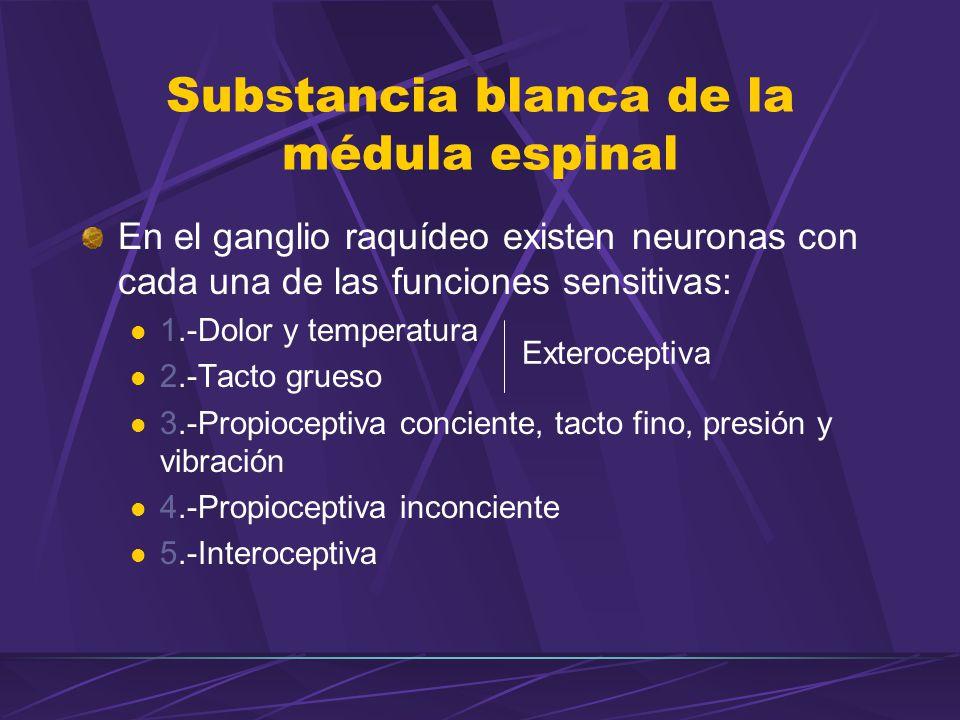 En el ganglio raquídeo existen neuronas con cada una de las funciones sensitivas: 1.-Dolor y temperatura 2.-Tacto grueso 3.-Propioceptiva conciente, tacto fino, presión y vibración 4.-Propioceptiva inconciente 5.-Interoceptiva Exteroceptiva Substancia blanca de la médula espinal