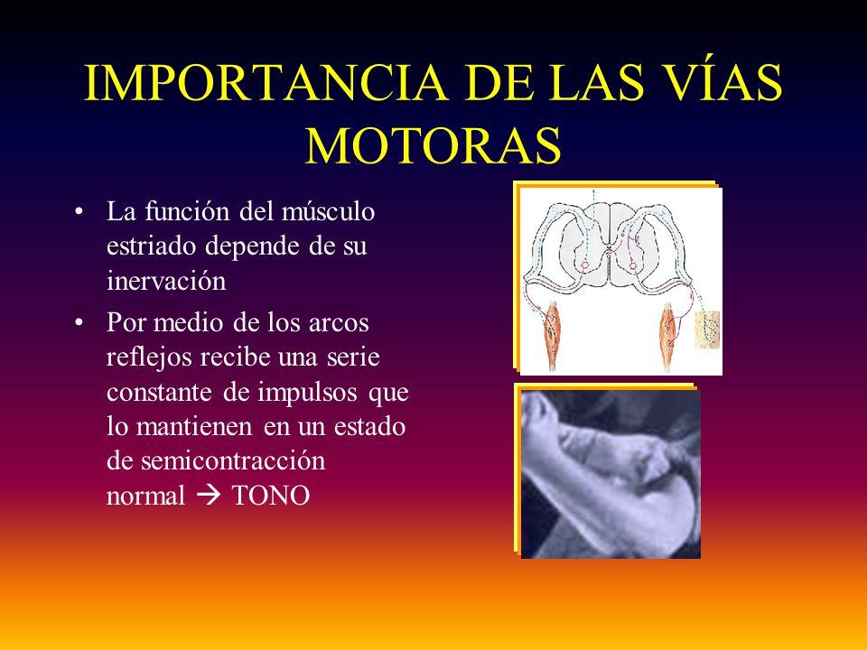 IMPORTANCIA DE LAS VÍAS MOTORAS La función del músculo estriado depende de su inervación Por medio de los arcos reflejos recibe una serie constante de