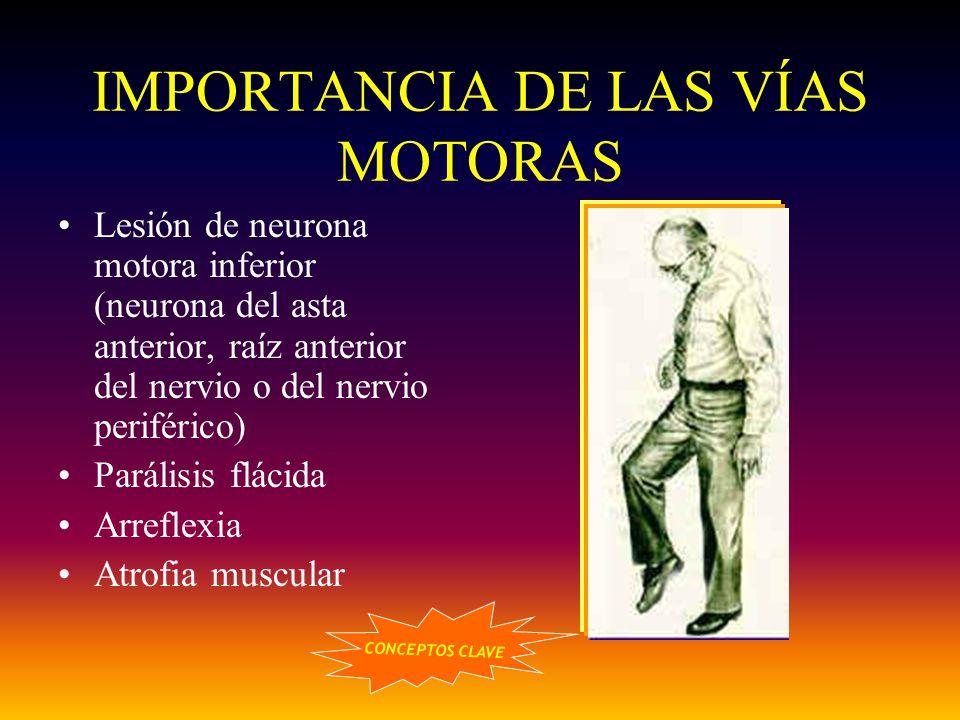IMPORTANCIA DE LAS VÍAS MOTORAS Lesión de neurona motora inferior (neurona del asta anterior, raíz anterior del nervio o del nervio periférico) Paráli