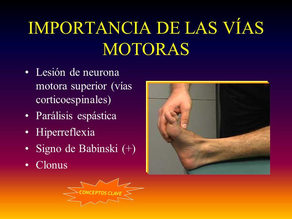 IMPORTANCIA DE LAS VÍAS MOTORAS Lesión de neurona motora superior (vías corticoespinales) Parálisis espástica Hiperreflexia Signo de Babinski (+) Clon
