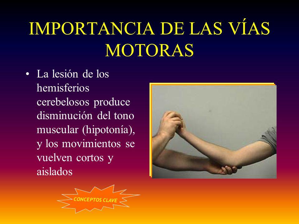 IMPORTANCIA DE LAS VÍAS MOTORAS La lesión de los hemisferios cerebelosos produce disminución del tono muscular (hipotonía), y los movimientos se vuelv