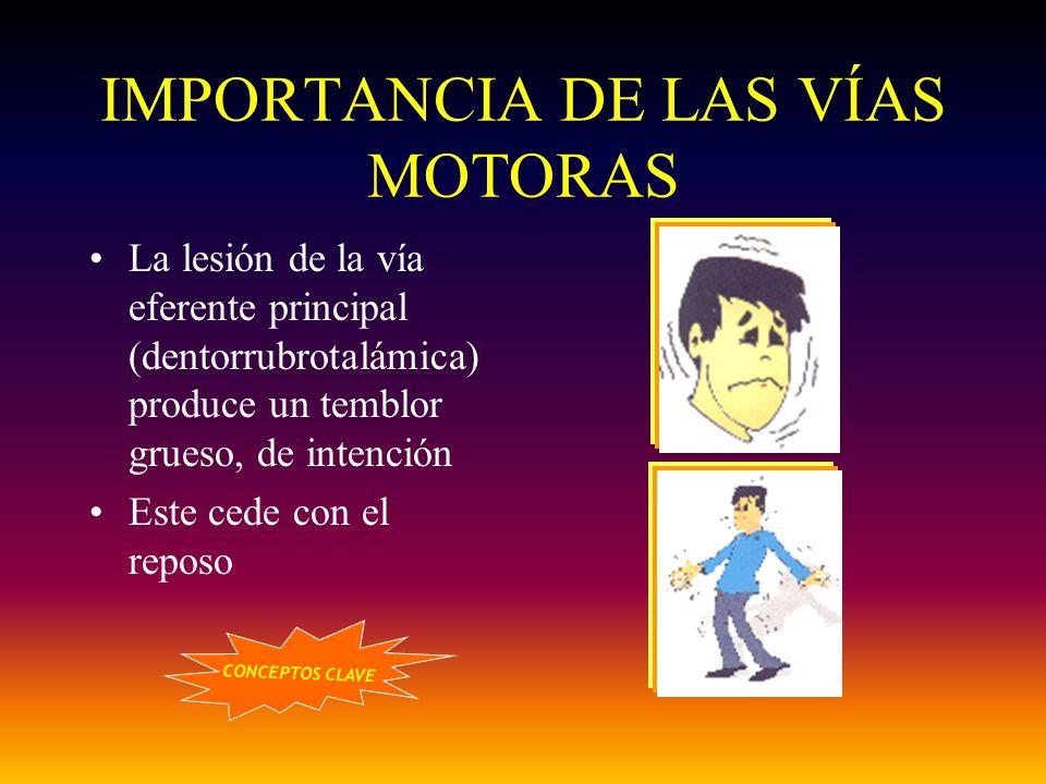 IMPORTANCIA DE LAS VÍAS MOTORAS La lesión de la vía eferente principal (dentorrubrotalámica) produce un temblor grueso, de intención Este cede con el
