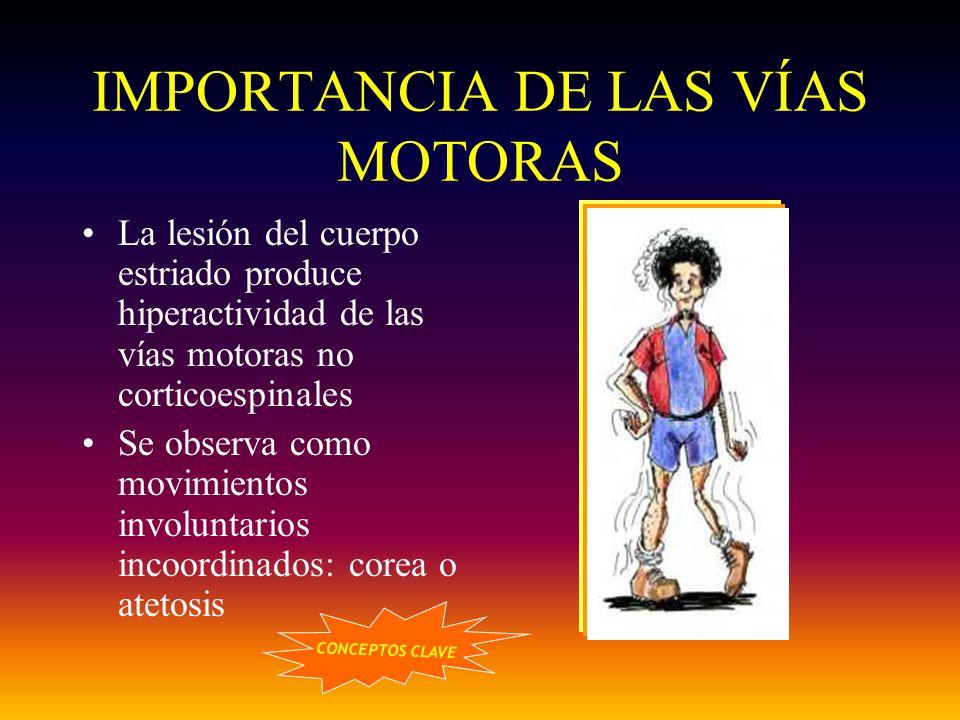 IMPORTANCIA DE LAS VÍAS MOTORAS La lesión del cuerpo estriado produce hiperactividad de las vías motoras no corticoespinales Se observa como movimient