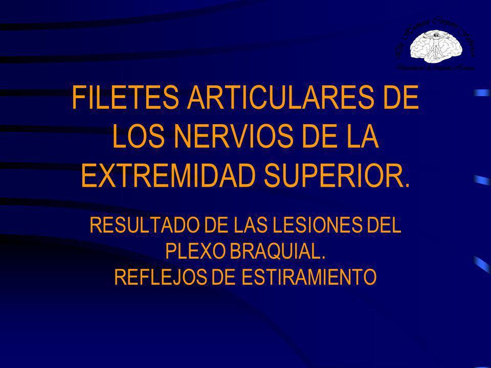 Filetes articulares de los nervios de la extremidad superior Articulación Escapulohumeral –Cara anterior y posterior de la porción inferior de la cápsula es inervada por el nervio circunflejo.