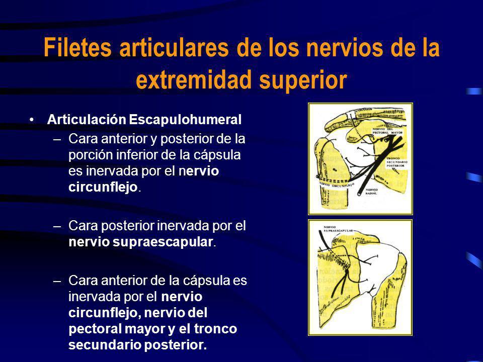 Filetes articulares de los nervios de la extremidad superior Articulación Escapulohumeral –Cara anterior y posterior de la porción inferior de la cáps