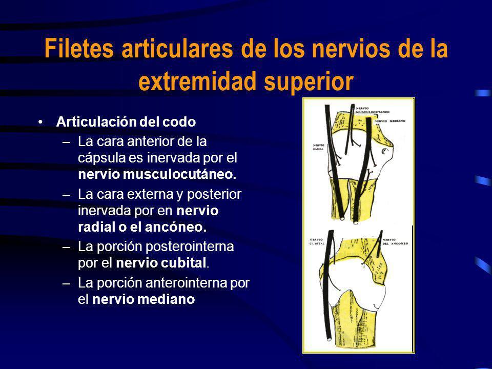 Articulación del codo –La cara anterior de la cápsula es inervada por el nervio musculocutáneo. –La cara externa y posterior inervada por en nervio ra