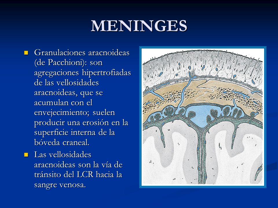 MENINGES Granulaciones aracnoideas (de Pacchioni): son agregaciones hipertrofiadas de las vellosidades aracnoideas, que se acumulan con el envejecimiento; suelen producir una erosión en la superficie interna de la bóveda craneal.