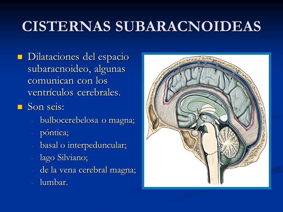 CISTERNAS SUBARACNOIDEAS Dilataciones del espacio subaracnoideo, algunas comunican con los ventrículos cerebrales.