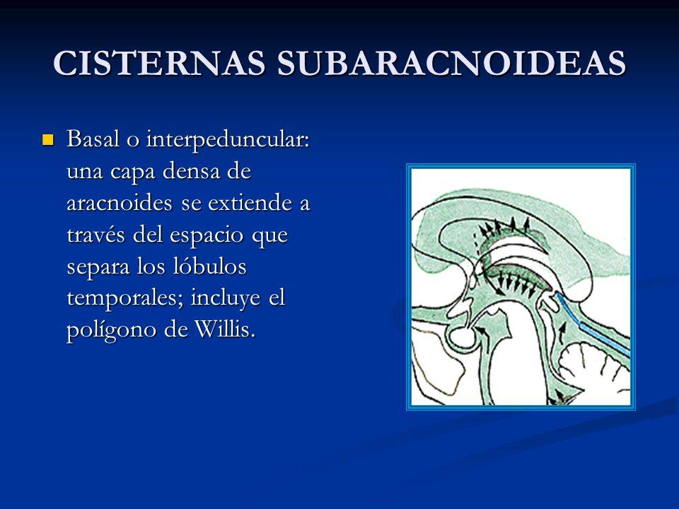CISTERNAS SUBARACNOIDEAS Basal o interpeduncular: una capa densa de aracnoides se extiende a través del espacio que separa los lóbulos temporales; incluye el polígono de Willis.