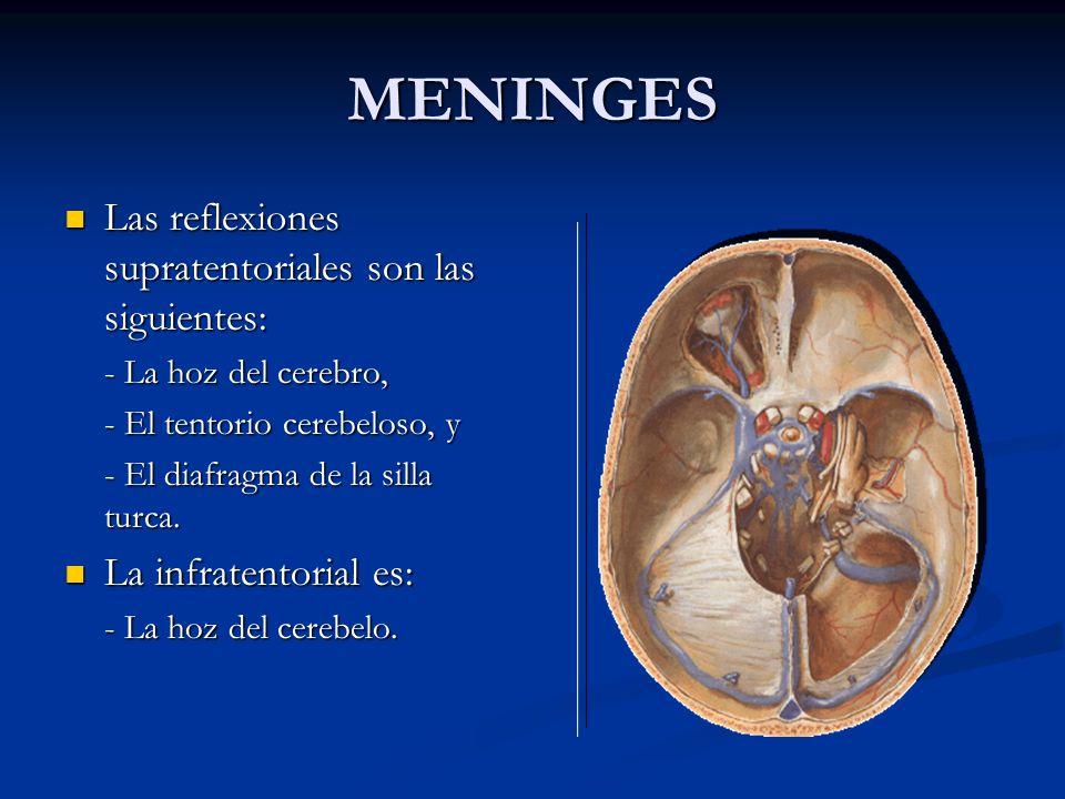 MENINGES Las reflexiones supratentoriales son las siguientes: Las reflexiones supratentoriales son las siguientes: - La hoz del cerebro, - El tentorio cerebeloso, y - El diafragma de la silla turca.