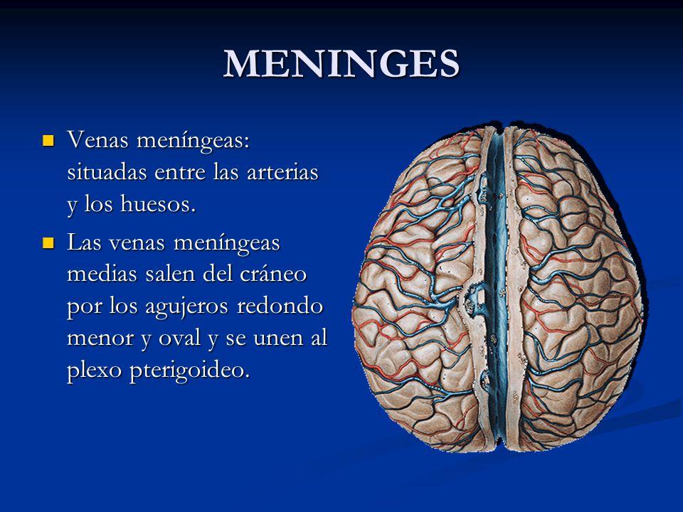 MENINGES Venas meníngeas: situadas entre las arterias y los huesos.