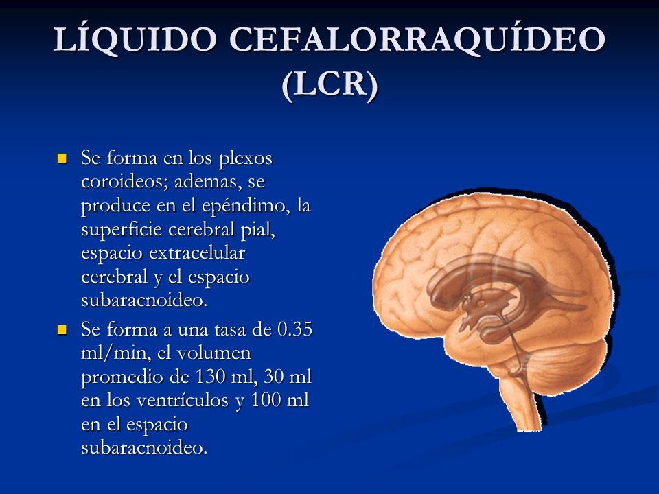 LÍQUIDO CEFALORRAQUÍDEO (LCR) Se forma en los plexos coroideos; ademas, se produce en el epéndimo, la superficie cerebral pial, espacio extracelular cerebral y el espacio subaracnoideo.