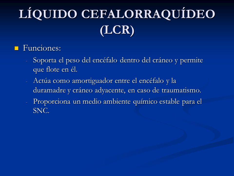 LÍQUIDO CEFALORRAQUÍDEO (LCR) Funciones: Funciones: - Soporta el peso del encéfalo dentro del cráneo y permite que flote en él.