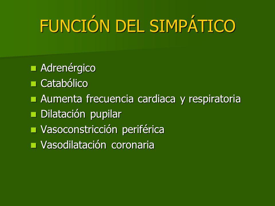 FUNCIÓN DEL SIMPÁTICO Adrenérgico Adrenérgico Catabólico Catabólico Aumenta frecuencia cardiaca y respiratoria Aumenta frecuencia cardiaca y respirato