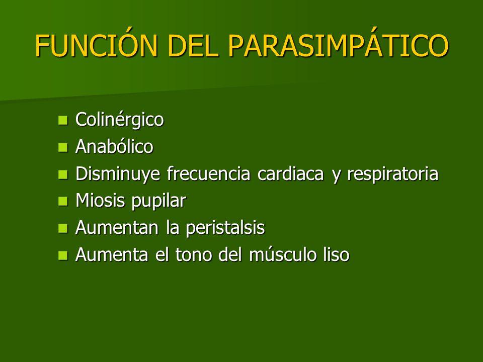 FUNCIÓN DEL PARASIMPÁTICO Colinérgico Colinérgico Anabólico Anabólico Disminuye frecuencia cardiaca y respiratoria Disminuye frecuencia cardiaca y res
