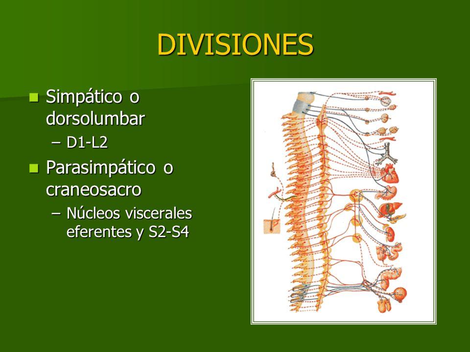 DIVISIONES Simpático o dorsolumbar Simpático o dorsolumbar –D1-L2 Parasimpático o craneosacro Parasimpático o craneosacro –Núcleos viscerales eferente