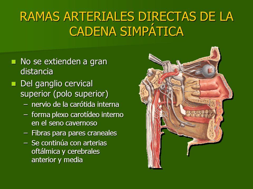RAMAS ARTERIALES DIRECTAS DE LA CADENA SIMPÁTICA No se extienden a gran distancia No se extienden a gran distancia Del ganglio cervical superior (polo