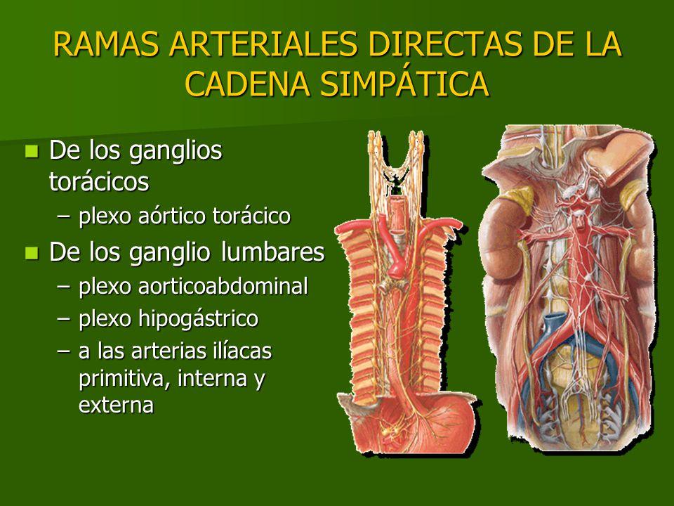 RAMAS ARTERIALES DIRECTAS DE LA CADENA SIMPÁTICA De los ganglios torácicos De los ganglios torácicos –plexo aórtico torácico De los ganglio lumbares D
