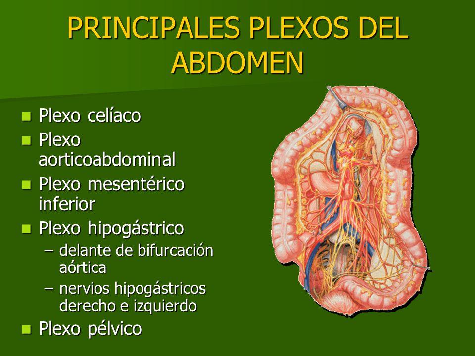 PRINCIPALES PLEXOS DEL ABDOMEN Plexo celíaco Plexo celíaco Plexo aorticoabdominal Plexo aorticoabdominal Plexo mesentérico inferior Plexo mesentérico