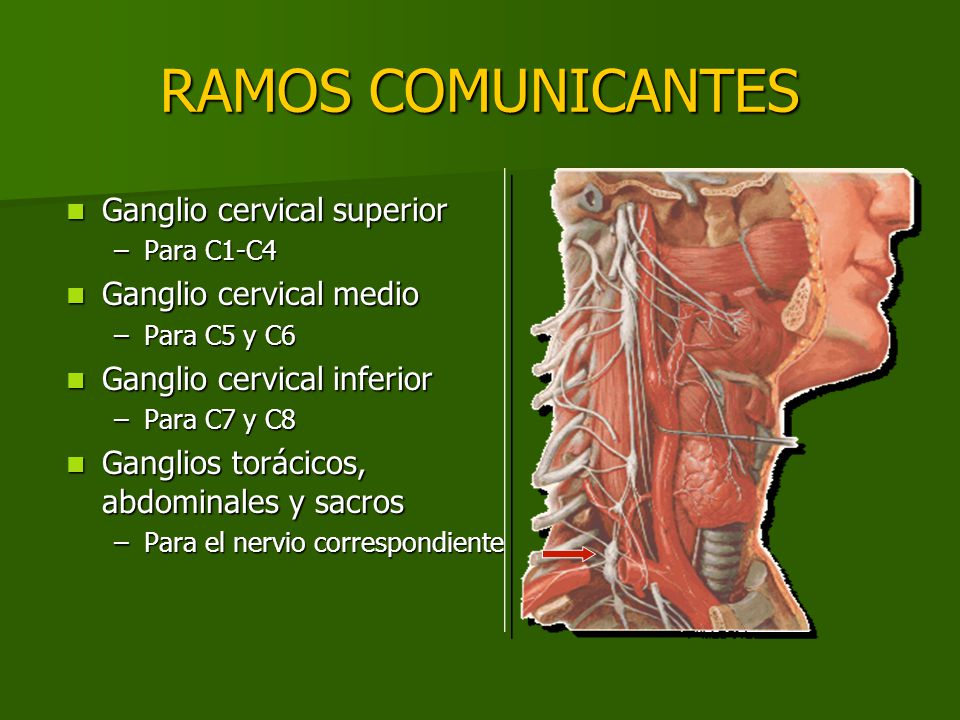RAMOS COMUNICANTES Ganglio cervical superior Ganglio cervical superior –Para C1-C4 Ganglio cervical medio Ganglio cervical medio –Para C5 y C6 Ganglio