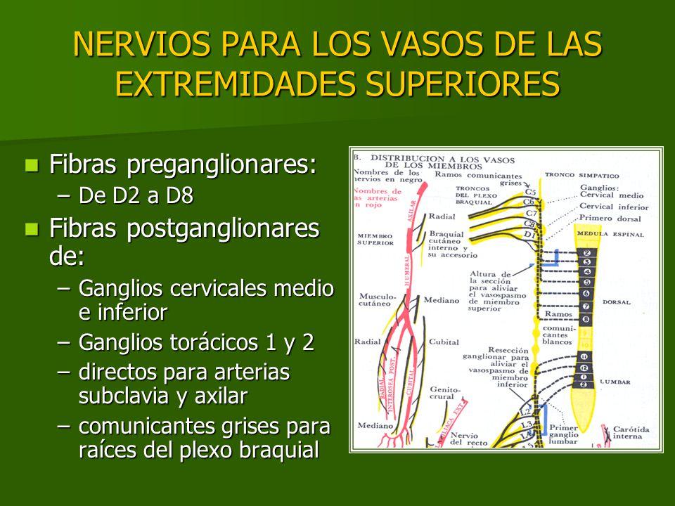NERVIOS PARA LOS VASOS DE LAS EXTREMIDADES SUPERIORES Fibras preganglionares: Fibras preganglionares: –De D2 a D8 Fibras postganglionares de: Fibras p