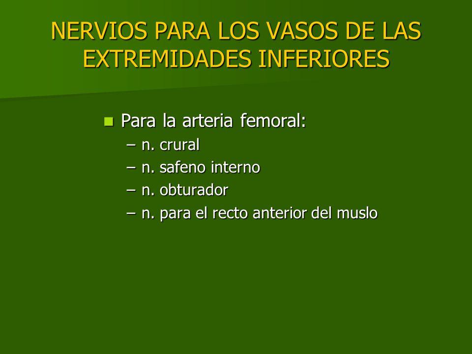 NERVIOS PARA LOS VASOS DE LAS EXTREMIDADES INFERIORES Para la arteria femoral: Para la arteria femoral: –n. crural –n. safeno interno –n. obturador –n