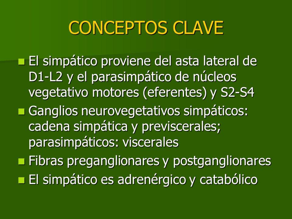 CONCEPTOS CLAVE El simpático proviene del asta lateral de D1-L2 y el parasimpático de núcleos vegetativo motores (eferentes) y S2-S4 El simpático prov