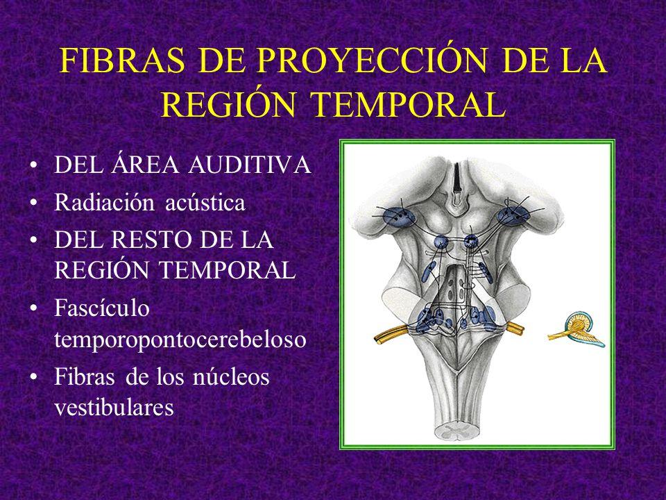 FIBRAS DE PROYECCIÓN DE LA REGIÓN TEMPORAL DEL ÁREA AUDITIVA Radiación acústica DEL RESTO DE LA REGIÓN TEMPORAL Fascículo temporopontocerebeloso Fibra