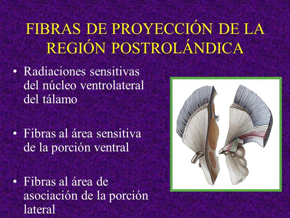 FIBRAS DE PROYECCIÓN DE LA REGIÓN POSTROLÁNDICA Radiaciones sensitivas del núcleo ventrolateral del tálamo Fibras al área sensitiva de la porción vent
