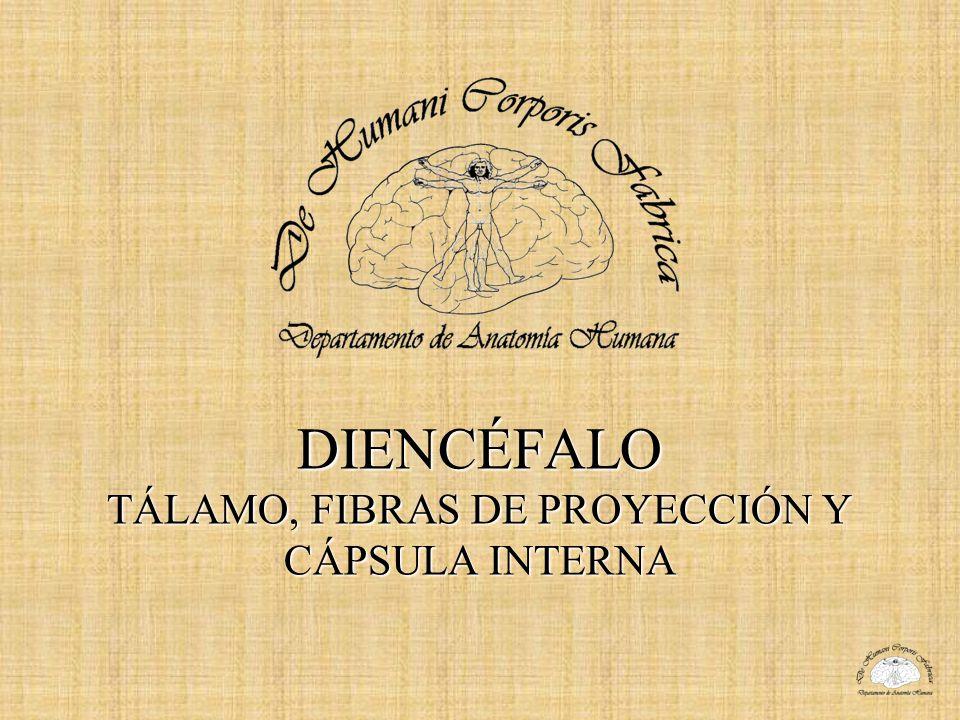DIENCÉFALO TÁLAMO, FIBRAS DE PROYECCIÓN Y CÁPSULA INTERNA