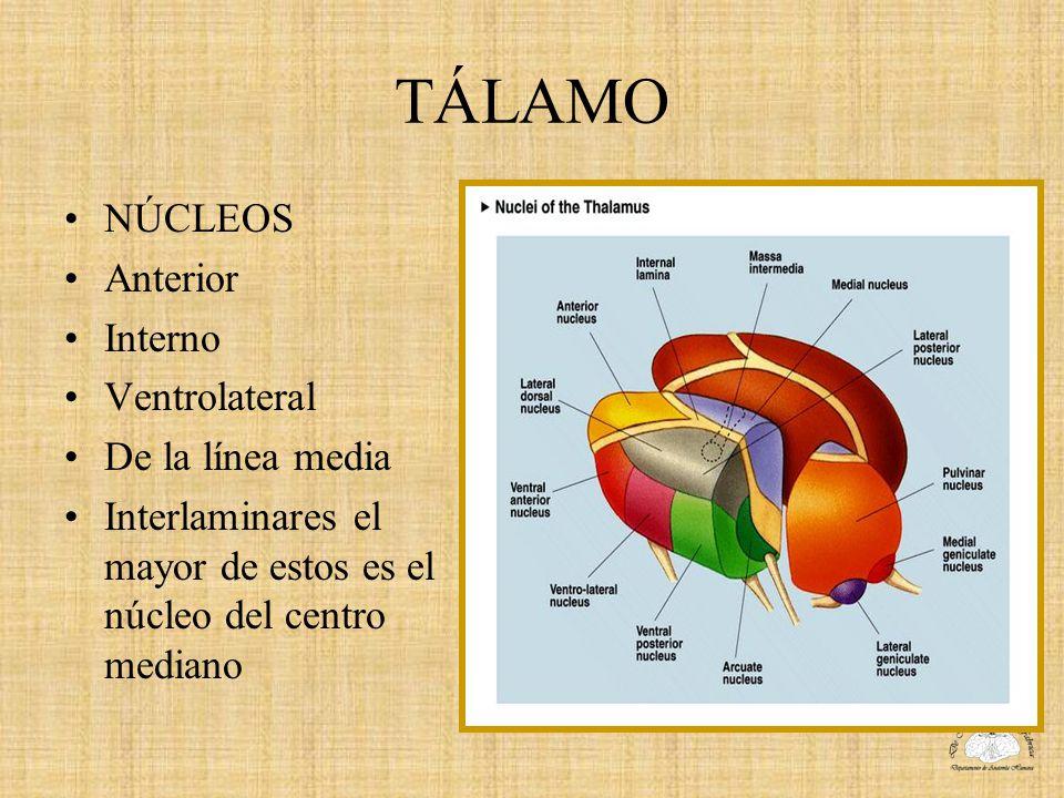 TÁLAMO NÚCLEOS Anterior Interno Ventrolateral De la línea media Interlaminares el mayor de estos es el núcleo del centro mediano