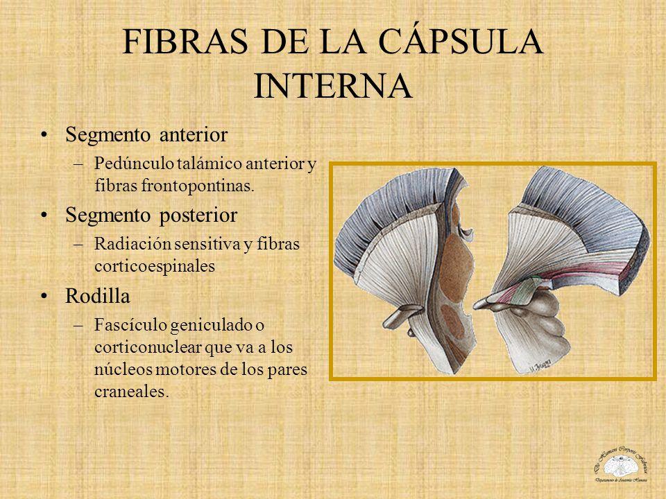 FIBRAS DE LA CÁPSULA INTERNA Segmento anterior –Pedúnculo talámico anterior y fibras frontopontinas. Segmento posterior –Radiación sensitiva y fibras