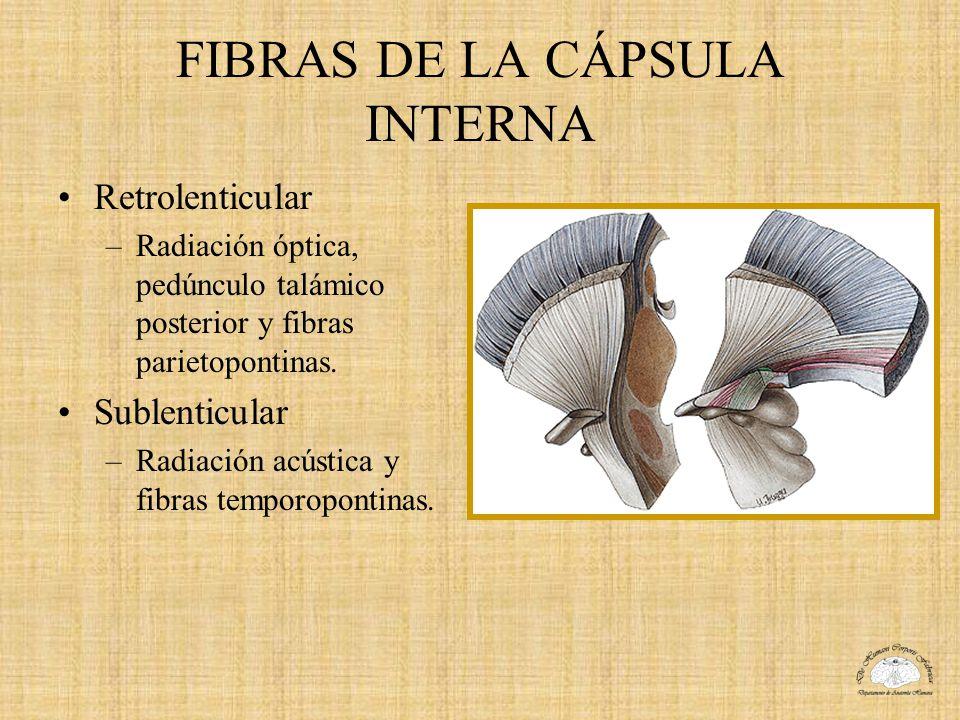 FIBRAS DE LA CÁPSULA INTERNA Retrolenticular –Radiación óptica, pedúnculo talámico posterior y fibras parietopontinas. Sublenticular –Radiación acústi