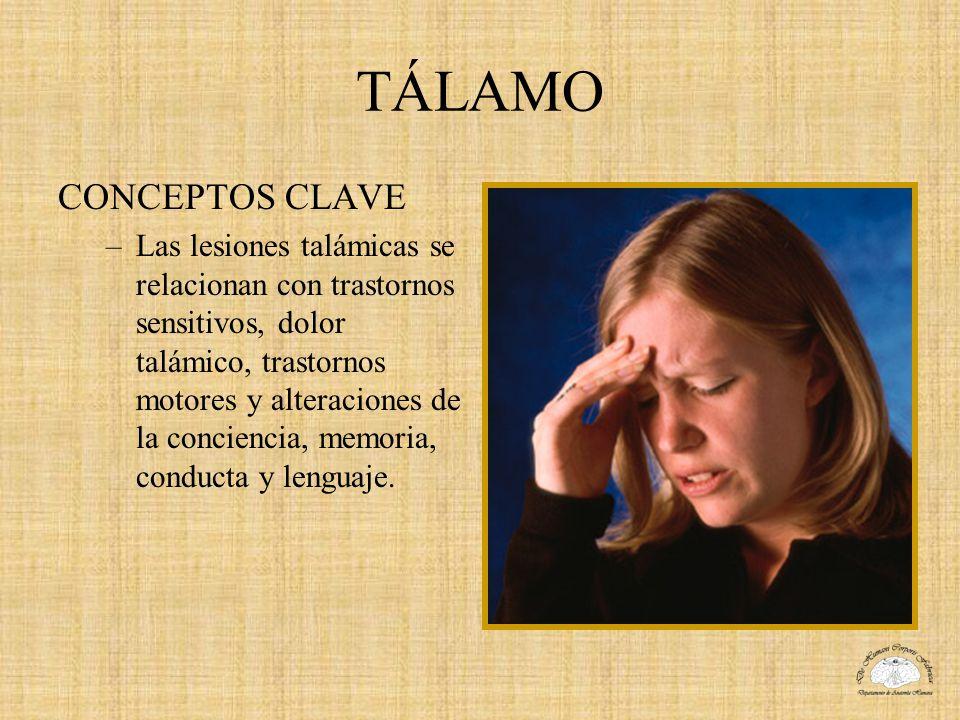 TÁLAMO CONCEPTOS CLAVE –Las lesiones talámicas se relacionan con trastornos sensitivos, dolor talámico, trastornos motores y alteraciones de la concie