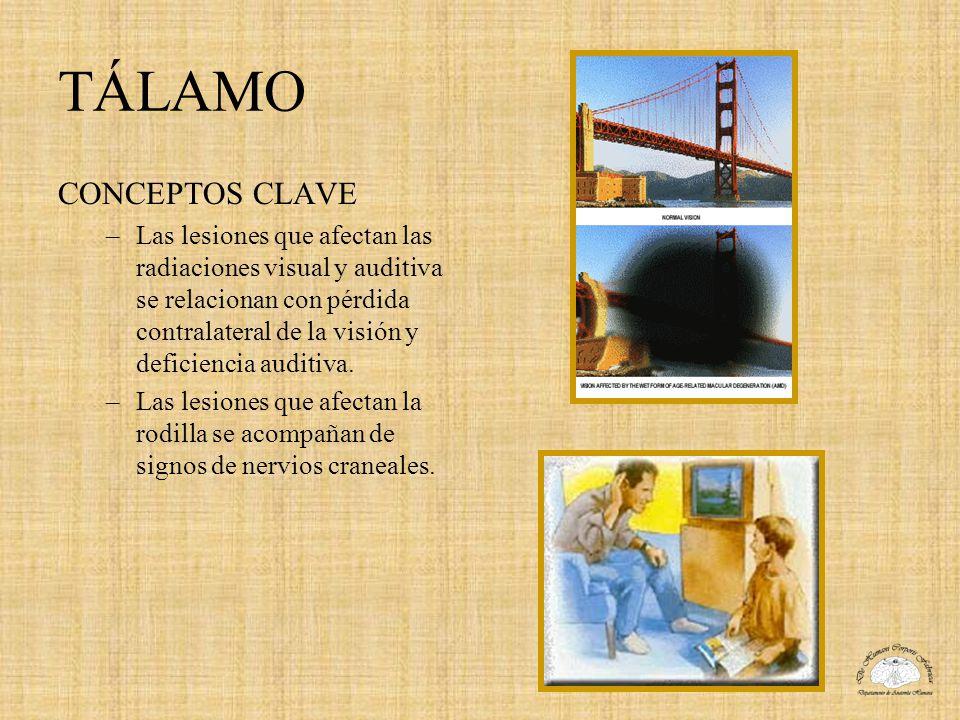 TÁLAMO CONCEPTOS CLAVE –Las lesiones que afectan las radiaciones visual y auditiva se relacionan con pérdida contralateral de la visión y deficiencia