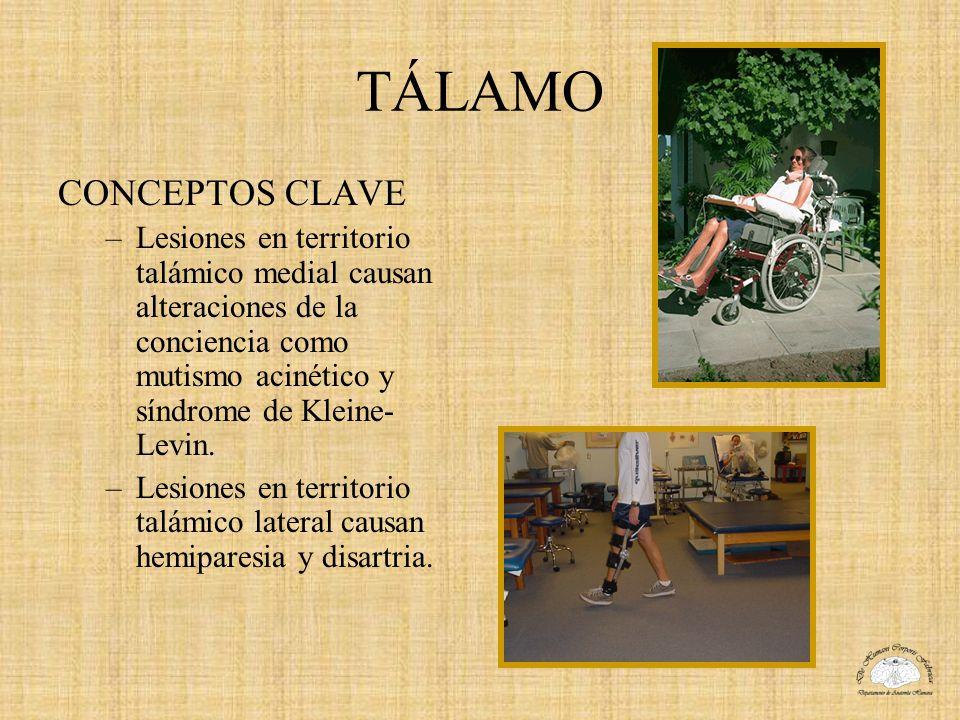 TÁLAMO CONCEPTOS CLAVE –Lesiones en territorio talámico medial causan alteraciones de la conciencia como mutismo acinético y síndrome de Kleine- Levin