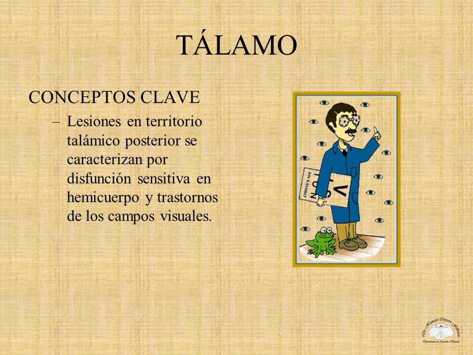 TÁLAMO CONCEPTOS CLAVE –Lesiones en territorio talámico posterior se caracterizan por disfunción sensitiva en hemicuerpo y trastornos de los campos vi