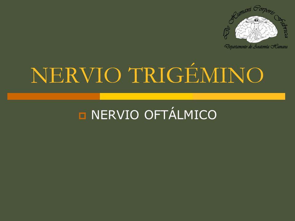 NERVIO TRIGÉMINO (PAR CRANEAL V) Del latín tres tres; gemino gemelos.