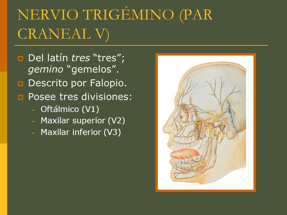 NERVIO TRIGÉMINO (PAR CRANEAL V) Del latín tres tres; gemino gemelos. Descrito por Falopio. Posee tres divisiones: - Oftálmico (V1) - Maxilar superior
