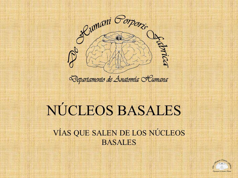 NÚCLEOS BASALES VÍAS QUE SALEN DE LOS NÚCLEOS BASALES