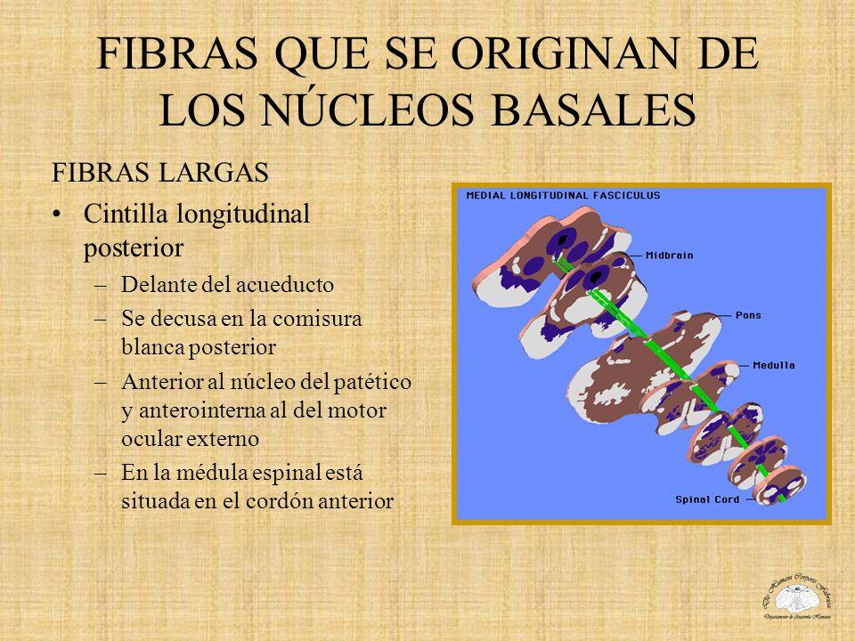 FIBRAS QUE SE ORIGINAN DE LOS NÚCLEOS BASALES FIBRAS LARGAS Cintilla longitudinal posterior –Delante del acueducto –Se decusa en la comisura blanca po
