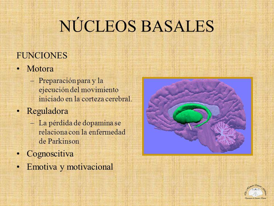 NÚCLEOS BASALES FUNCIONES Motora –Preparación para y la ejecución del movimiento iniciado en la corteza cerebral. Reguladora –La pérdida de dopamina s