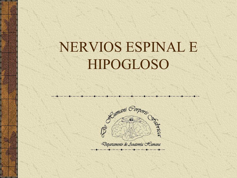 Nervios Espinal e Hipogloso Describiremos lo siguiente: Origen real.