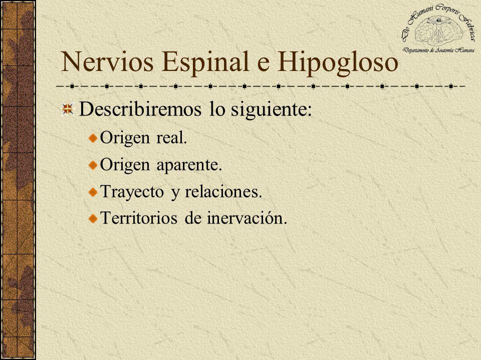 Nervio Espinal La rama interna queda incluida en el nervio vago y se distribuye en todos los músculos de la larínge, todos los músculos de la farínge (excepto estilofaríngeo), todos los músculos del paladar (excepto peristafilino externo).