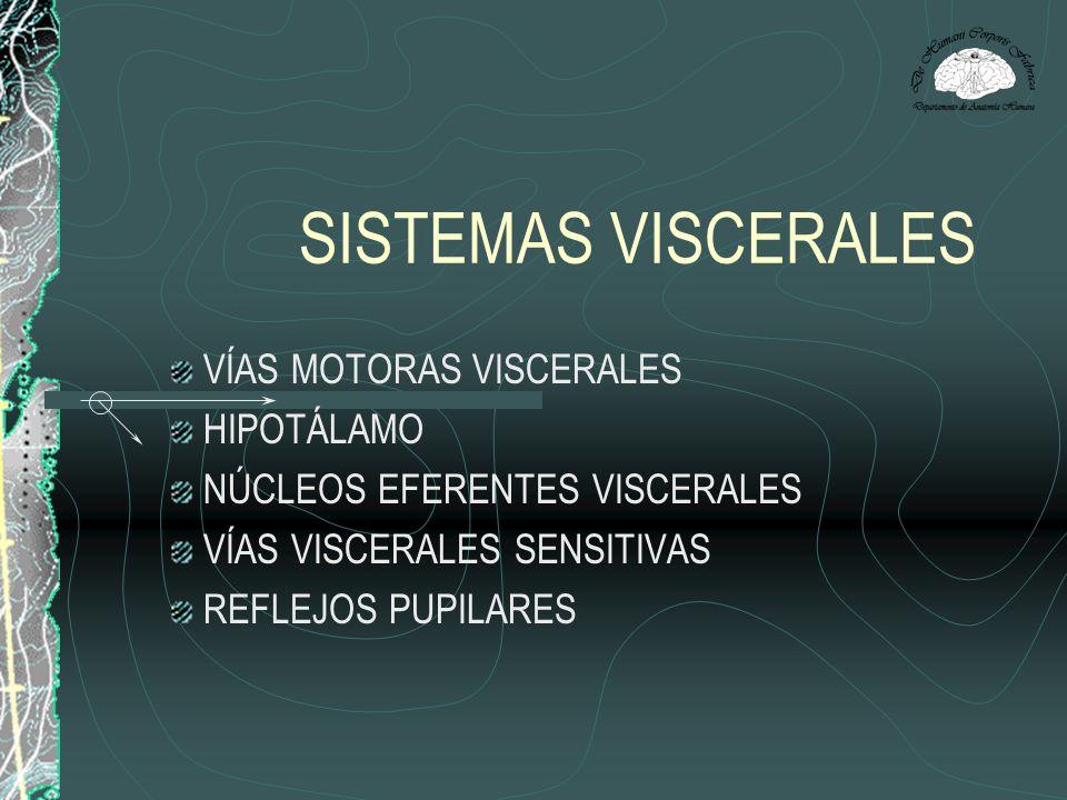 SISTEMAS VISCERALES VÍAS MOTORAS VISCERALES HIPOTÁLAMO NÚCLEOS EFERENTES VISCERALES VÍAS VISCERALES SENSITIVAS REFLEJOS PUPILARES
