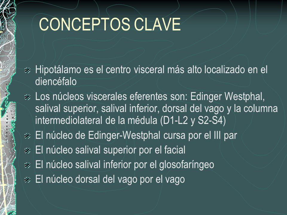 CONCEPTOS CLAVE Hipotálamo es el centro visceral más alto localizado en el diencéfalo Los núcleos viscerales eferentes son: Edinger Westphal, salival