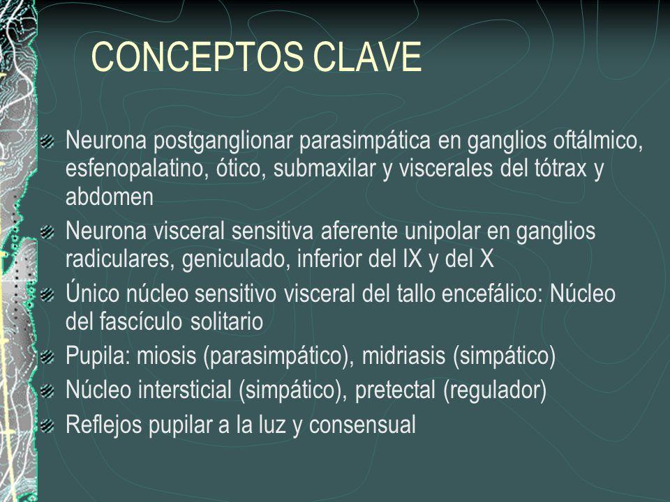 CONCEPTOS CLAVE Neurona postganglionar parasimpática en ganglios oftálmico, esfenopalatino, ótico, submaxilar y viscerales del tótrax y abdomen Neurona visceral sensitiva aferente unipolar en ganglios radiculares, geniculado, inferior del IX y del X Único núcleo sensitivo visceral del tallo encefálico: Núcleo del fascículo solitario Pupila: miosis (parasimpático), midriasis (simpático) Núcleo intersticial (simpático), pretectal (regulador) Reflejos pupilar a la luz y consensual