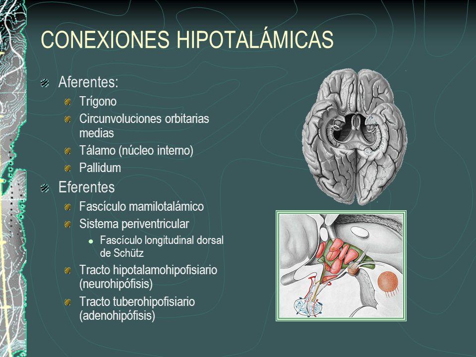 FUNCIONES DEL HIPOTÁLAMO Control hidroelectrolítico (ADH) Contracción uterina y expulsión de leche por la mama (oxitocina) Control de adenohipófisis (factores liberadores) Control de centros autonómicos del tallo encefálico y la médula espinal relacionados con la función cardiovascular, respiratoria y gastrointestinal.