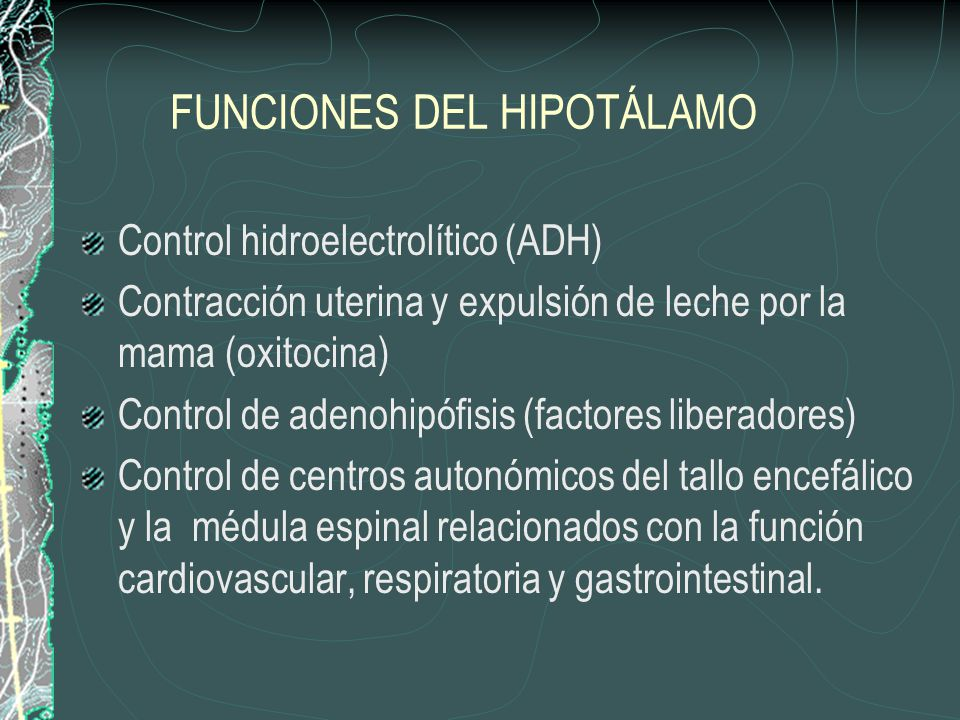 FUNCIONES DEL HIPOTÁLAMO Control de la temperatura corporal Conducta emocional (lucha o huida) Conducta alimenticia (centros de saciedad y hambre) Regulación de la ingesta de líquidos y la sed Sueño y vigilia Ritmo circadiano Memoria